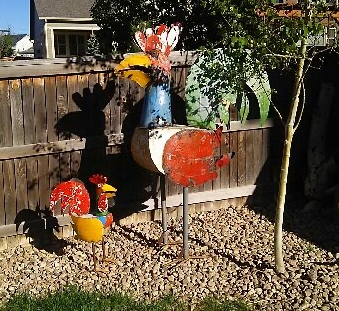 chickens enjoying a sunny afternoon